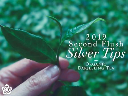 2019natsu_silver01