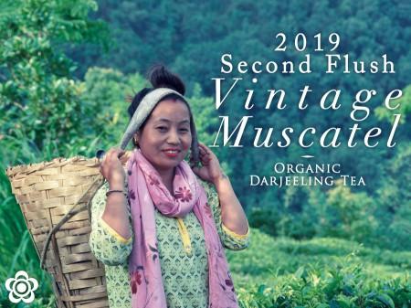 2019natsu_vintage01